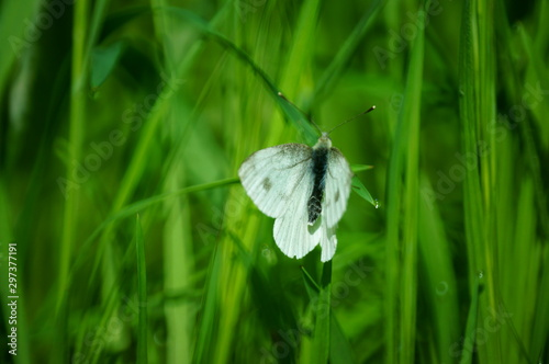 white butterfly on green grass