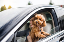 Young Woman Driver With A Dog ...