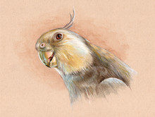 Portrait Of A White-faced Cockatiel