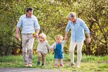 Senior Grandparents With Toddler Grandchildren Walking In Nature In Spring.