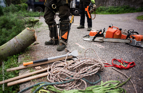 Fotomural  Midsection of arborist men with chainsaw and ropes cutting a tree