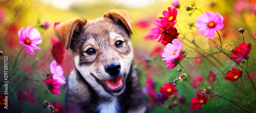 Fotomural charming brown puppy sits among pink daisies flowers in the Sunny summer garden