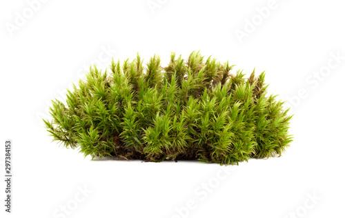 Carta da parati green moss sphagnum closeup isolated