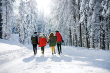 A Rear View Of Group Of Young Friends On A Walk Outdoors In Snow In Winter Forest.