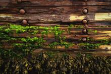 Seaweed On Abandoned Wooden Sh...