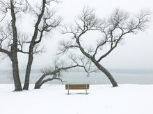 Close Up View Of Trees And Bench In Snow