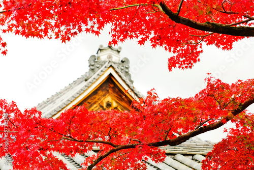 View of the Tofuku-ji Temple in autumn with colorful trees in Kyoto, Japan. - 297393146