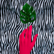 canvas print picture Red hand and palm on zebra background. Minimal fashion art