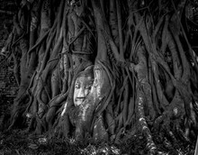 The Trapped Buddha.