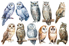 Set Of Owls On An Isolated Whi...