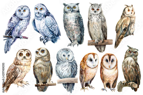 set of owls on an isolated white background, watercolor illustration