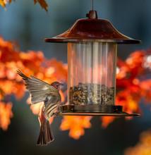 Cardinal Bird On A Bird Feeder