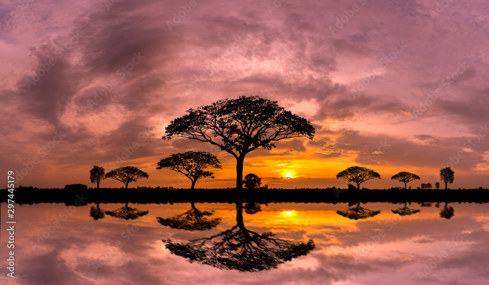 Fototapeta Panorama silhouette tree and Mountain with sunset.Tree silhouetted against a setting sun reflection on water.Typical african sunset with acacia trees in Masai Mara, Kenya.