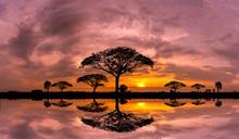 Panorama Silhouette Tree And M...