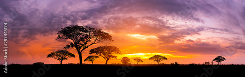 Fototapeta Panorama silhouette tree in africa with sunset.Tree silhouetted against a setting sun.Dark tree on open field dramatic sunrise.Typical african sunset with acacia trees in Masai Mara, Kenya obraz
