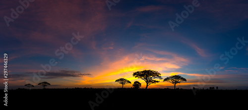 Photo sur Aluminium Bleu nuit Panorama silhouette tree in africa with sunset.Tree silhouetted against a setting sun.Dark tree on open field dramatic sunrise.Typical african sunset with acacia trees in Masai Mara, Kenya