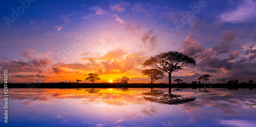 Panorama silhouette tree and Mountain with sunset Poster Mural XXL