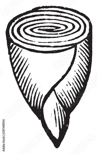 Valokuva Embryo of Calycanthus vintage illustration.