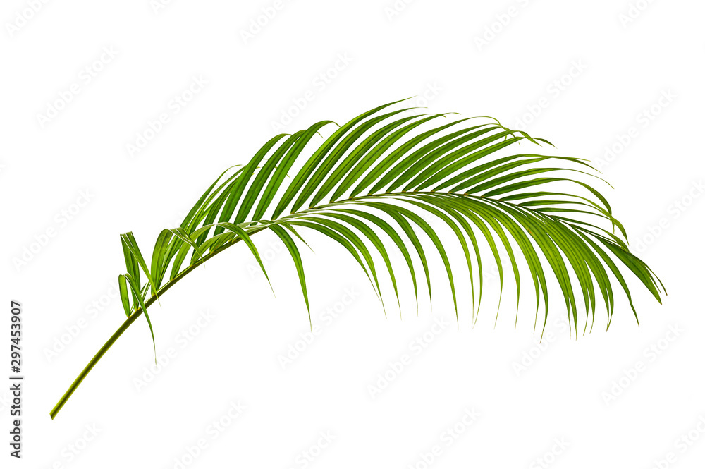 Fototapety, obrazy: Palm leaves isolated on white background.