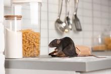 Rat Near Gnawed Bag Of Flour O...