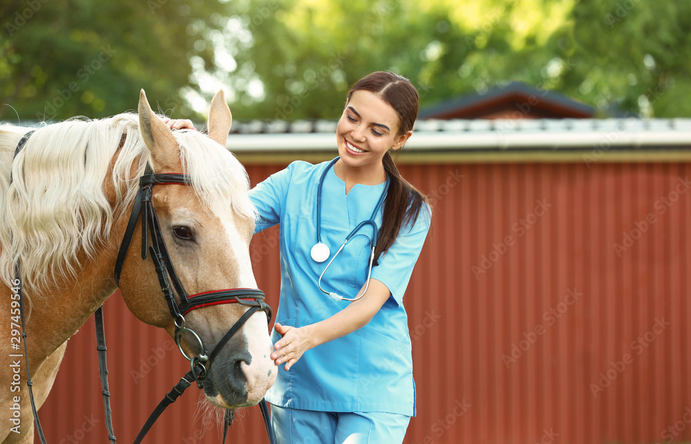 Fototapety, obrazy: Young veterinarian with palomino horse outdoors on sunny day