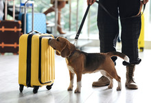 Officer With Dog Checking Suitcase In Airport, Closeup. Luggage Inspection