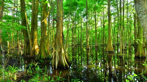 Photo Trees cast reflections down in the bayou as the sun shine through