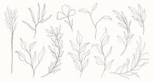 Plant Nature Hand Drawn Set. C...