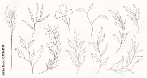 Canvas-taulu Plant nature hand drawn set