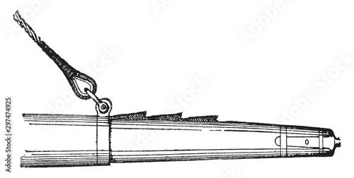 Fototapeta Cockscomb, vintage illustration.