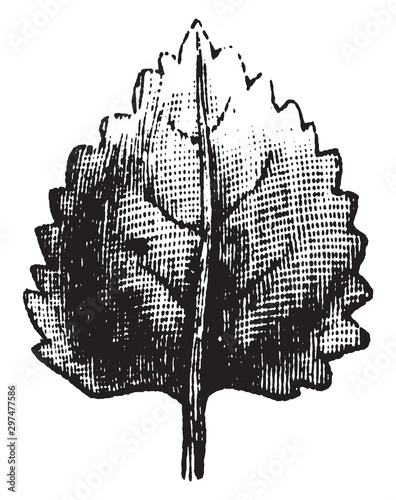 Obraz na plátně  Leaf vintage illustration.
