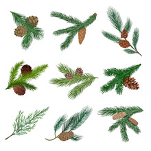 Set Of Coniferous Branches Wit...