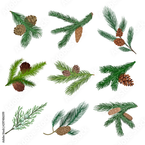 Fotomural  Set of coniferous branches with cones. Vector illustration.