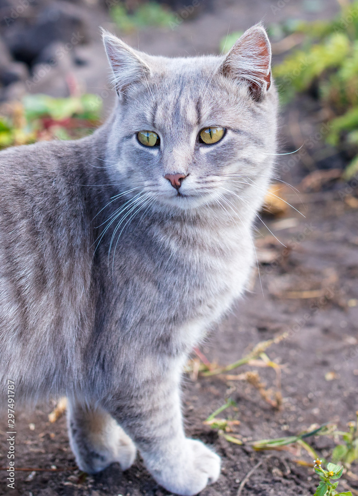 Portrait of a cat on the nature