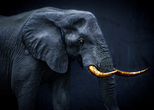Ghostly Fantasy Image Of An African Elephant