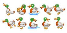 Duck Vector Set Clipart Design
