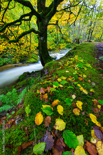 Muniellos Nature Reserve, Fuentes del Narcea Degaña e Ibias Natural Park, Asturias, Spain, Europe