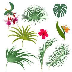 Tropical palm leaves, jungle flowers, botanical vector illustration, set isolated on white background.