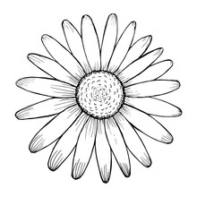 Flower Drawn By Lines With Lon...