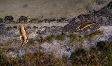 Aerial View Of Deers In The Au...