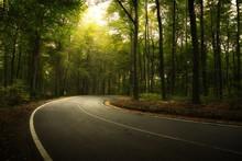 Asphalt Road Across Autumn Forest