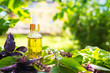 Leinwanddruck Bild - Oil for skin care, massage from natural ingredients, herbs, mint in glass jars and test tubes on a green background in the garden on the nature, natural cosmetics