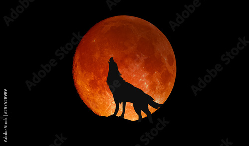 Foto Wolf howling at the big full blood moon