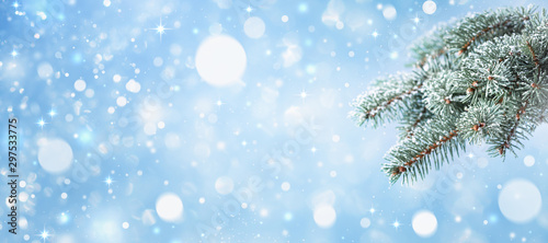 Snow covered fir branches on blue bokeh background. Winter card, banner format.