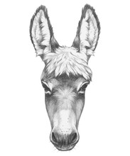 Portrait Of Donkey. Hand Drawn...