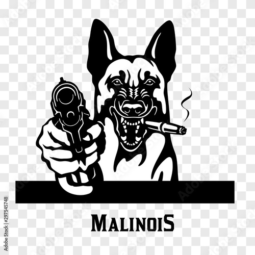 Photo Malinois with guns - Malinois gangster. Head of angry Malinois