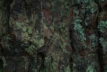 Tree Bark With Lichen