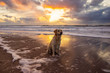 canvas print picture Urlaub mit Hund in Dänemark