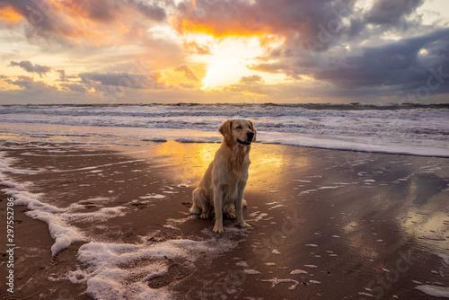 Poster La Mer du Nord Urlaub mit Hund in Dänemark