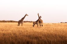 African Safaris And Landscapes